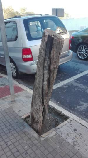 Solicitan información sobre la gestión del arbolado urbano