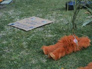 Los orangutanes de Borneo piden el fin del biodiésel de palma