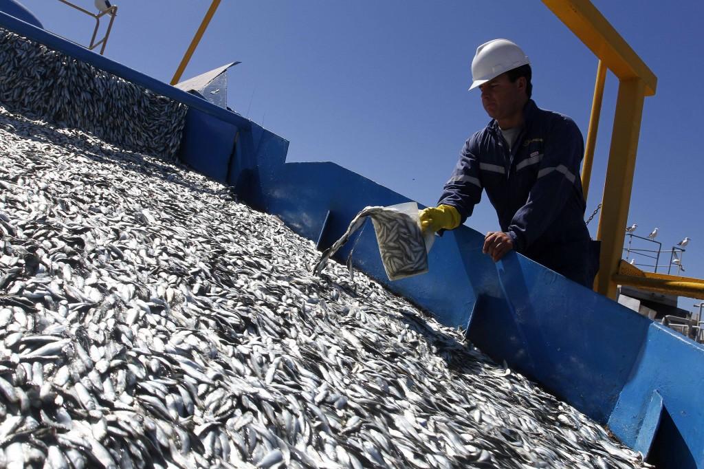 La pesca de la sardina ibérica en peligro