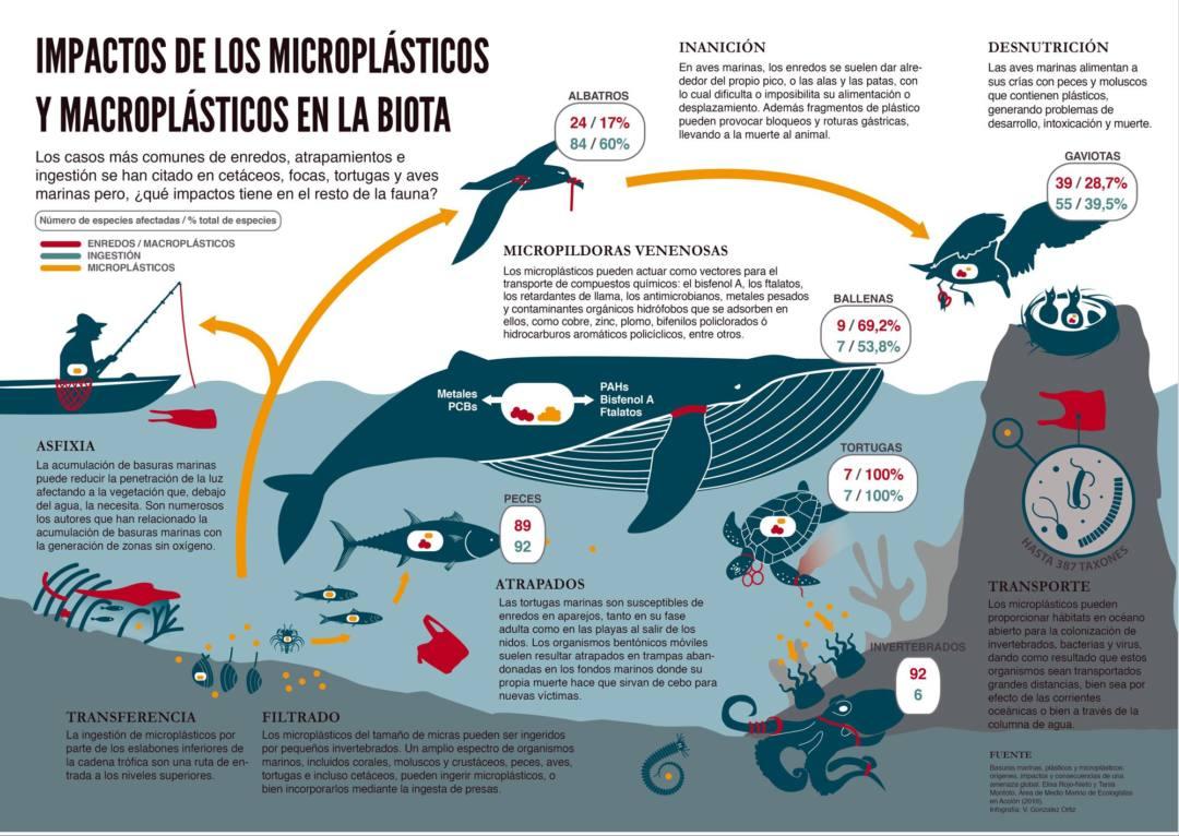 Basuras marinas: ¿Cuáles son nuestras propuestas?