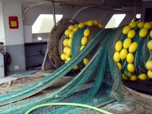 El Europarlamento tiene en su mano acabar con la sobrepesca en el Mediterráneo