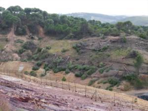 Tala de árboles en el perímetro del vertedero de residuos peligrosos de Nerva