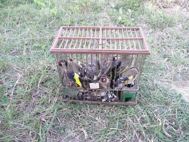 El Equipo de gobierno con tal de buscar votos, apoya a un sector que extermina las aves