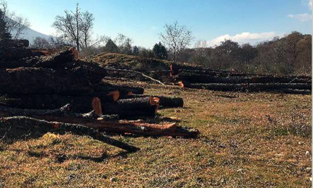 Denuncian la tala de mas de 120 árboles en la ribera del río Jerte