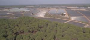 No sólo los frutos rojos asolan el acuífero de Doñana