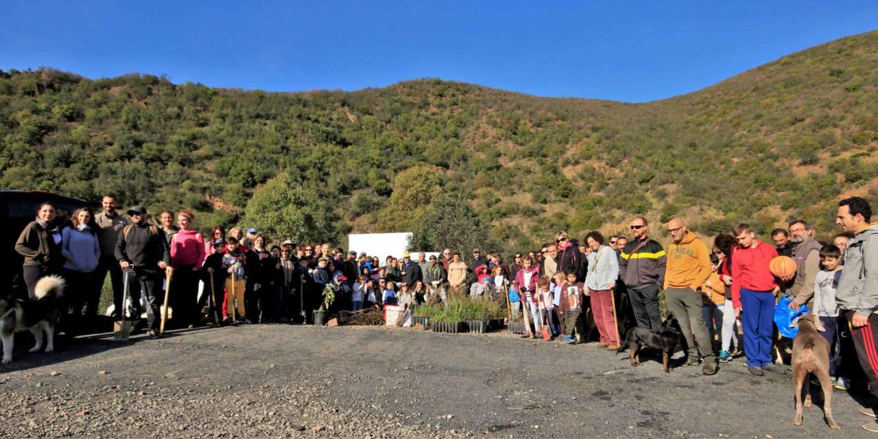 Unas 150 personas participan en la siembra en Berrocal