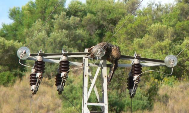 Proponen soluciones para evitar las electrocuciones de aves