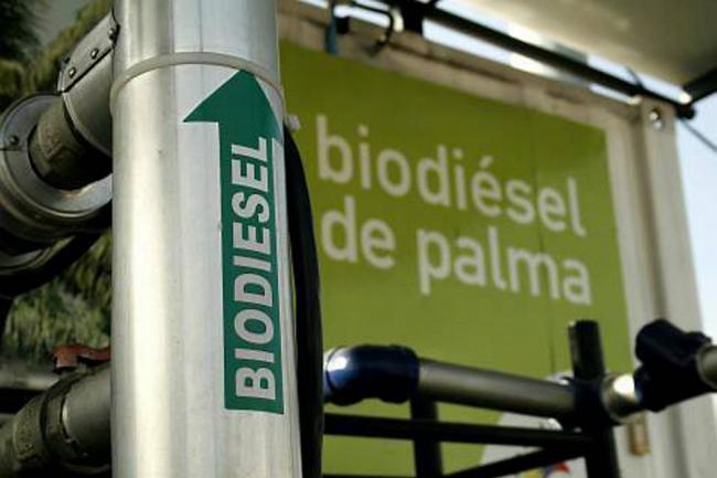 La Unión Europea clasifica el biodiésel de palma como insostenible