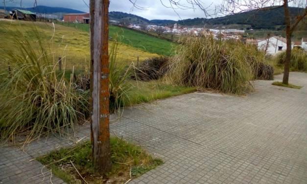 Solicitan la eliminación del plumero de la Pampa