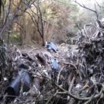 Plásticos provenientes del vertedero de Los Barrios en el cauce del arroyo del Chorreón