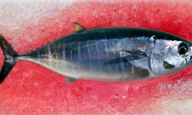 Alertas por mercurio en pescado 2018