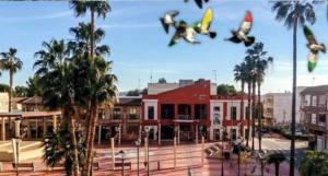 Denuncian el concurso de colombicultura en Pedralba por anacrónico y fuera de lugar