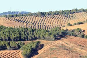 Demandan una nueva ordenación que proteja los bosques mediterráneos onubenses de la regresión forestal que sufren