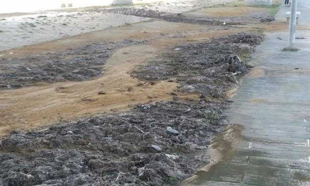 Aparición de toallitas en la playa de Los Lances y de la Concha