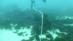 Presencia de redes fantasma que matan fauna marina en la Isla de Tarifa