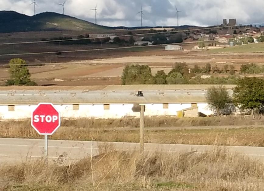 El TSJCYL anula la exención de licencia ambiental a las explotaciones ganaderas intensivas