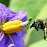 Adverteixen de les greus conseqüències ambientals socials i econòmiques de la reducció dels insectes pol·linitzadors
