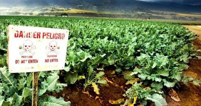 España quiere traer de vuelta un plaguicida no autorizado por su alta peligrosidad