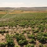 Denuncian la extracción abusiva de agua para regadío en parcelas agrícolas de Torrejón de Velasco