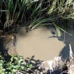 Urbanizaciones de lujo vierten aguas fecales al río Guadalix