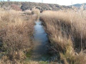 Abandono de la Reserva Natural El Regajal